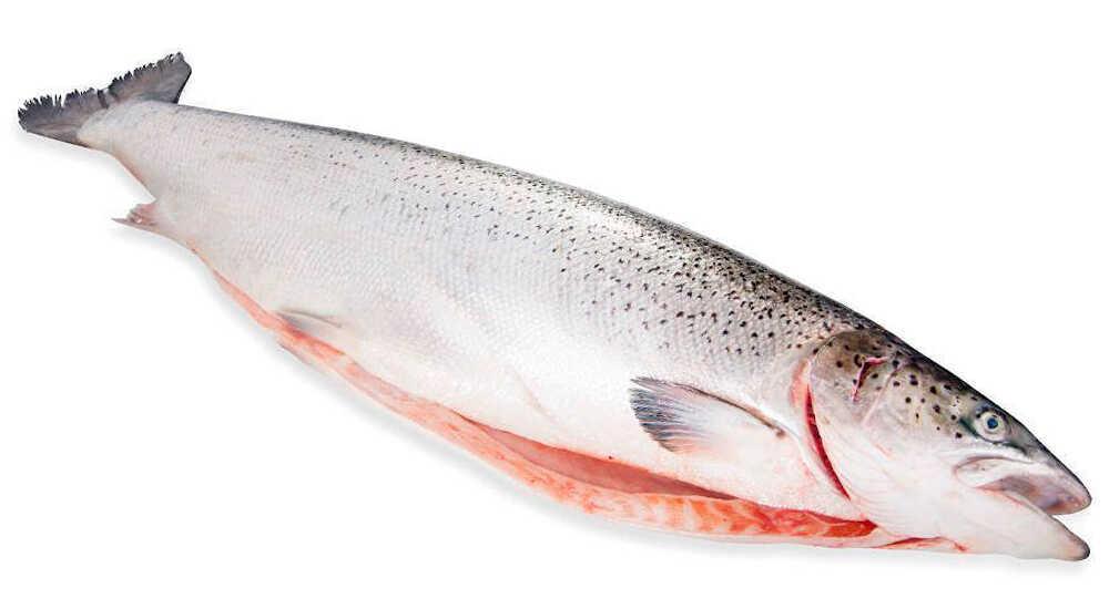 Разделанная тушка лосося
