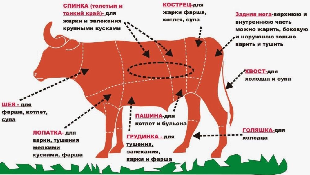 Части тушки телятины и говядины