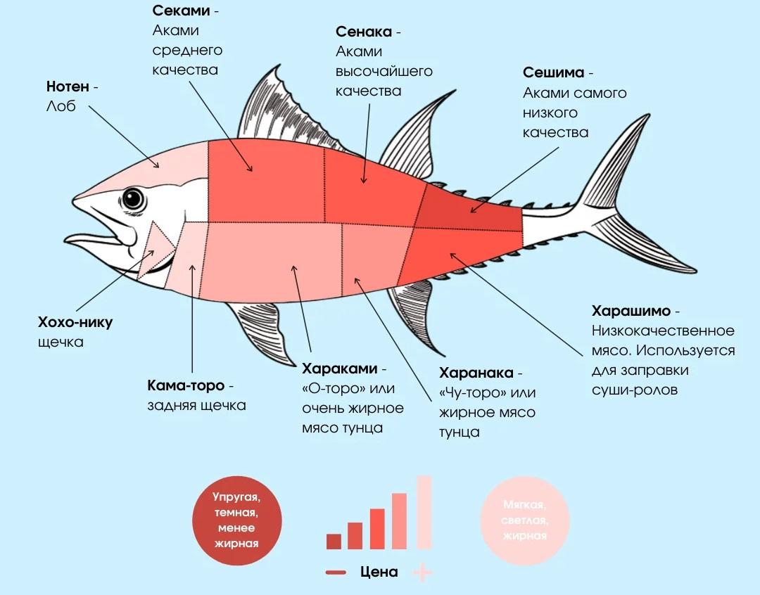 Части тушки тунца