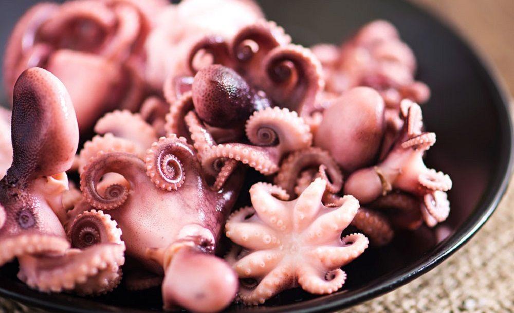 Маленькие осьминоги в тарелке