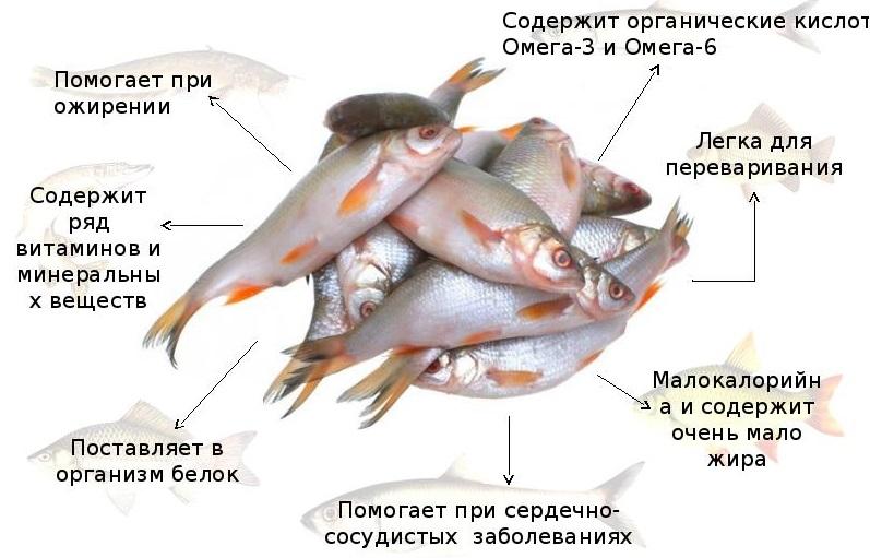 Польза белой рыбы