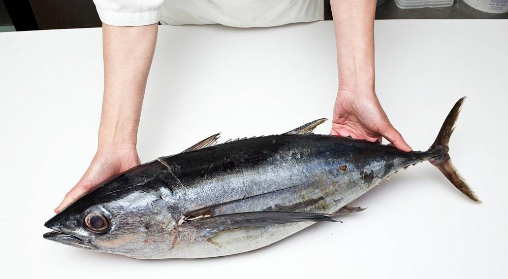 Тушка чернопёрого тунца