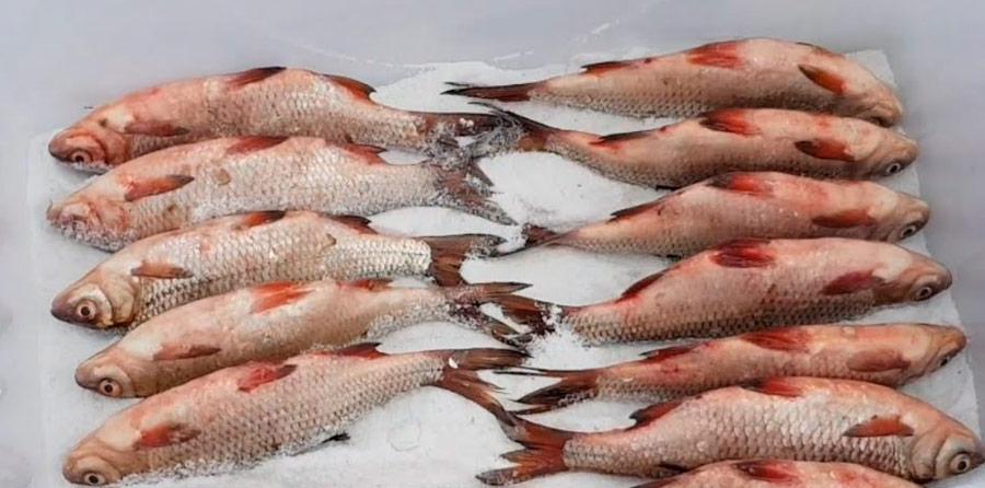 засолка рыбы для копчения